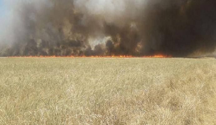 حماة.. حرائق في المحاصل الزراعية جراء اعتداءات إرهابية على الشيخ حديد