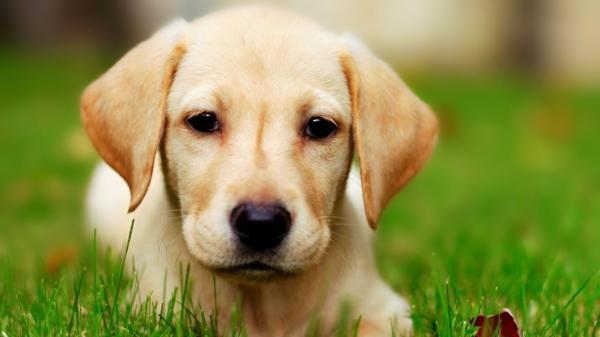 """""""الكلاب"""" قد تكون وسيلة لعلاج نوع من السرطان"""