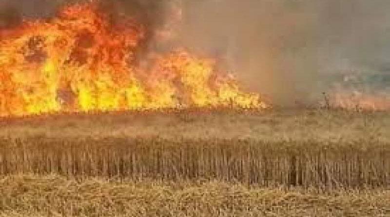 اتحاد الشباب تشيكي: إحراق المحاصيل الزراعية في سورية جريمة حرب