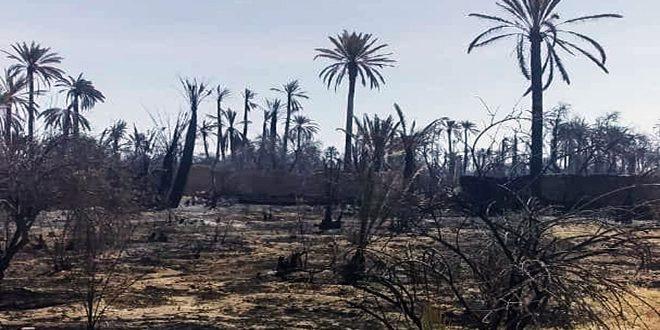 طال نحو 200 هكتار.. إخماد حريق في واحة بساتين تدمر التاريخية