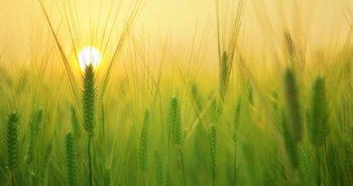 هل نحتاج مشروع وطني للتنمية والإصلاح الزراعي؟!