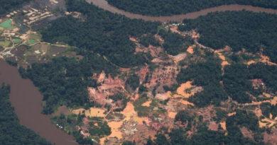 ماذا يفعل تعدين الذهب بمنطقة الأمازون؟