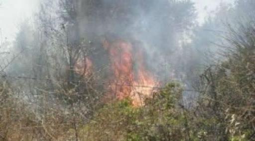 جراء الحرائق.. ضرر 3700 دونم من الأراضي الزراعية بدرعا
