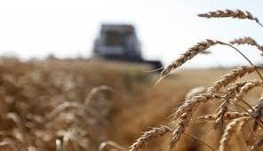 مؤسسة الحبوب التركية تنهب محاصيل القمح والشعير السورية