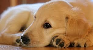 """كلب يسرق """"آيس كريم"""" من الثلاجة أثناء نوم صاحبه"""