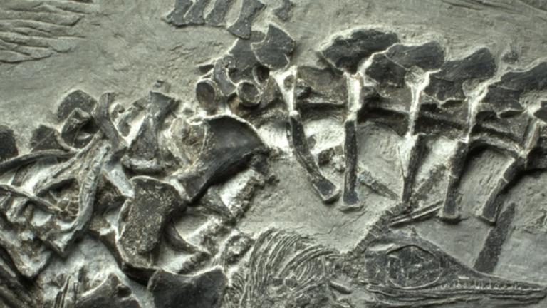 اكتشاف بقايا إكثيوصور في جزيرة روسكي في فلاديفوستوك